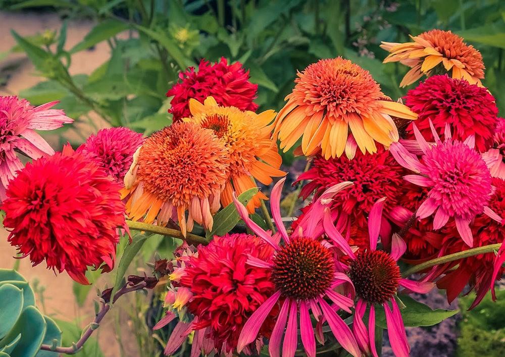 植物园的收获---百花迎夏 2_图1-2