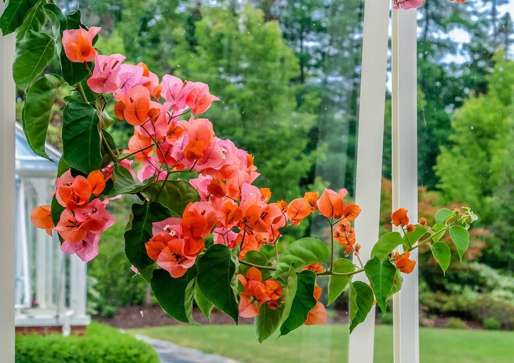 植物园的收获---百花迎夏 2_图1-3