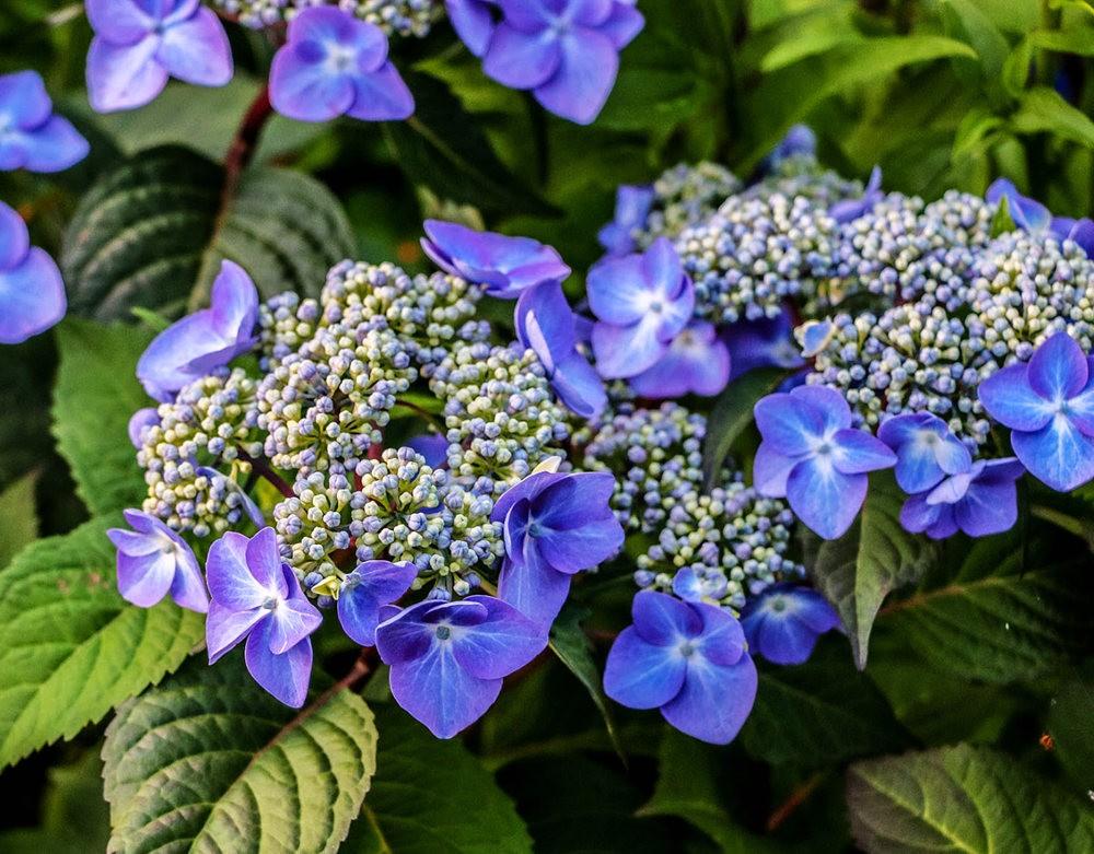 植物园的收获---百花迎夏 2_图1-7