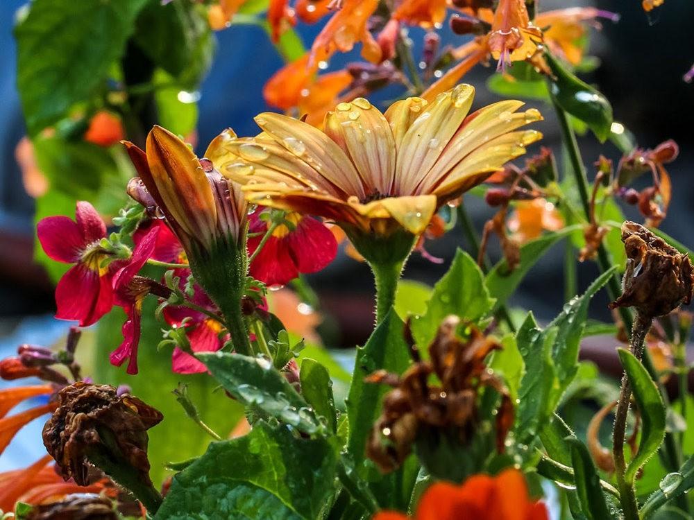 植物园的收获---百花迎夏 2_图1-9