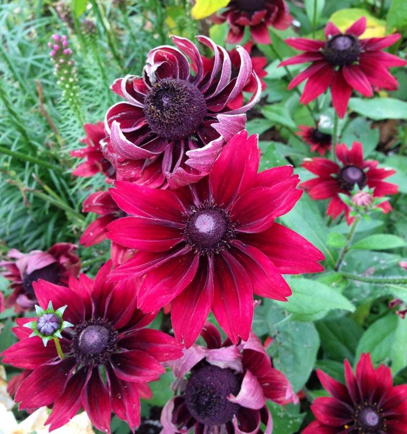 植物园的收获---百花迎夏 2_图1-10