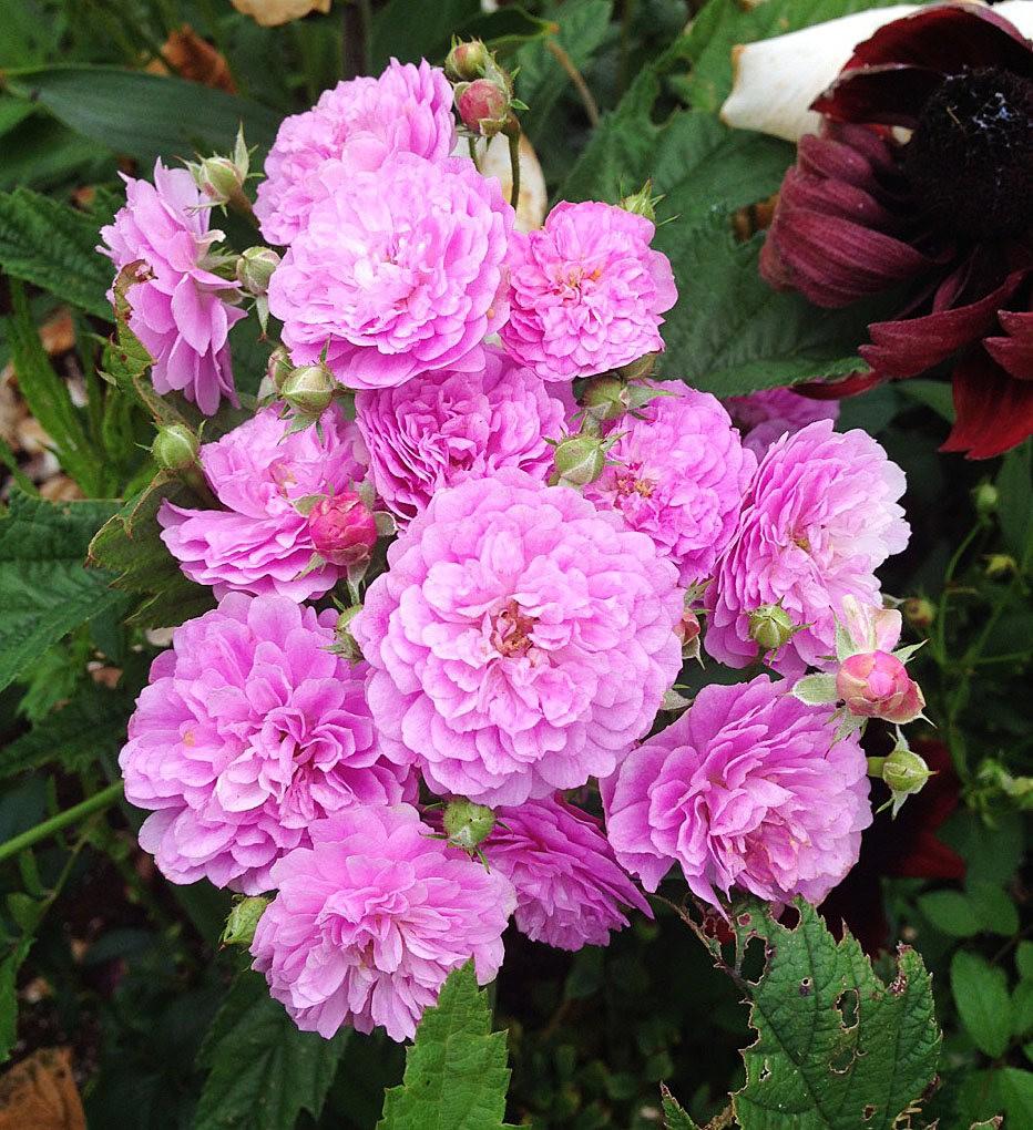 植物园的收获---百花迎夏 2_图1-12