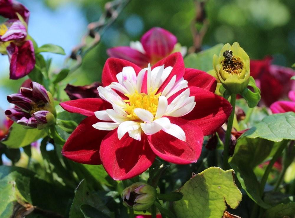 植物园的收获---百花迎夏 2_图1-15