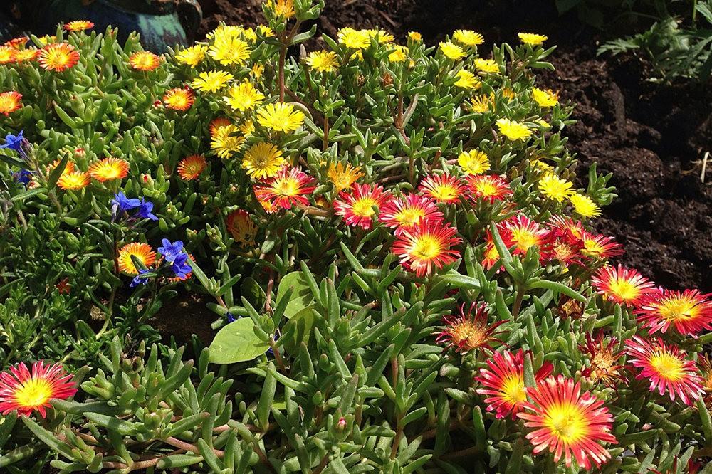 植物园的收获---百花迎夏 2_图1-17