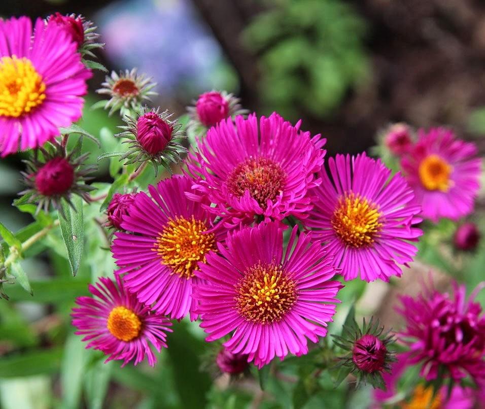 植物园的收获---百花迎夏 2_图1-22
