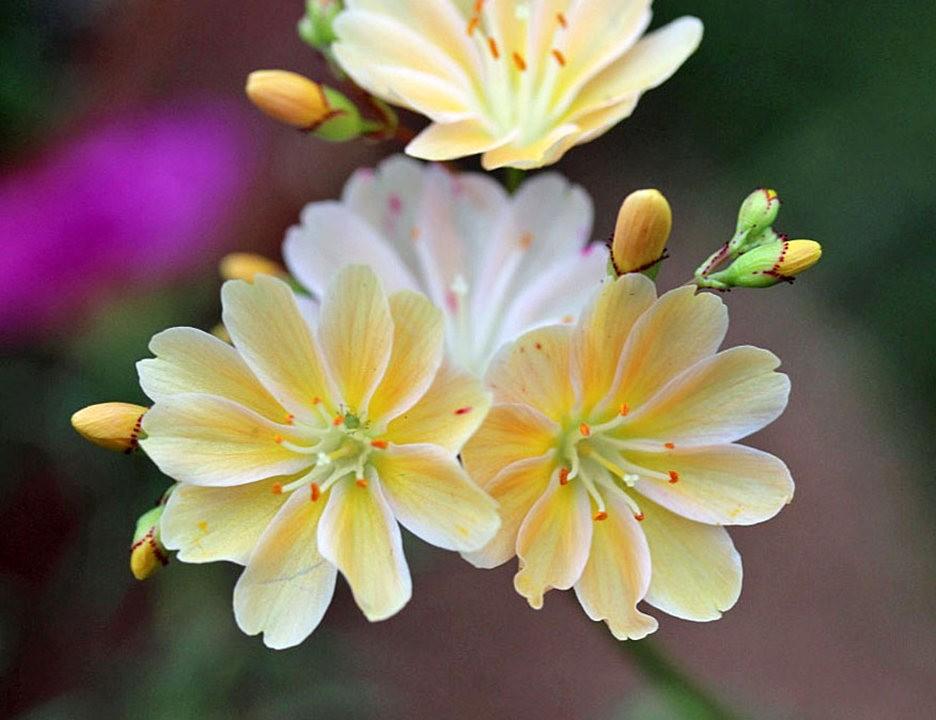 植物园的收获---百花迎夏 2_图1-23