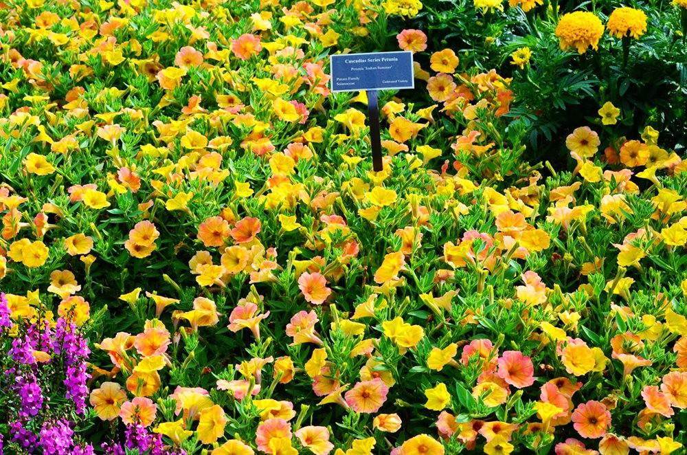 北卡罗来纳州植物园_图1-33