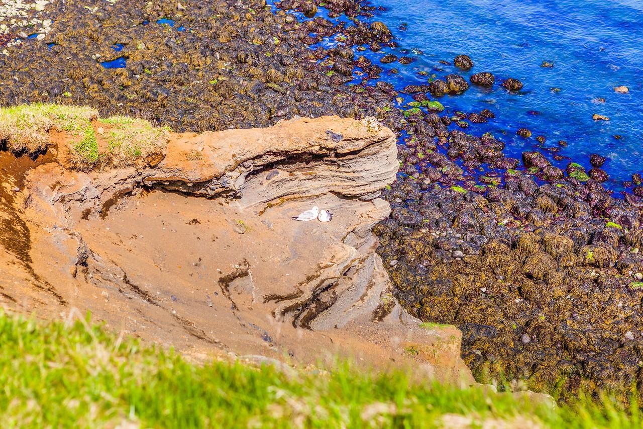冰岛Arnarstapi,海边的悬崖_图1-18