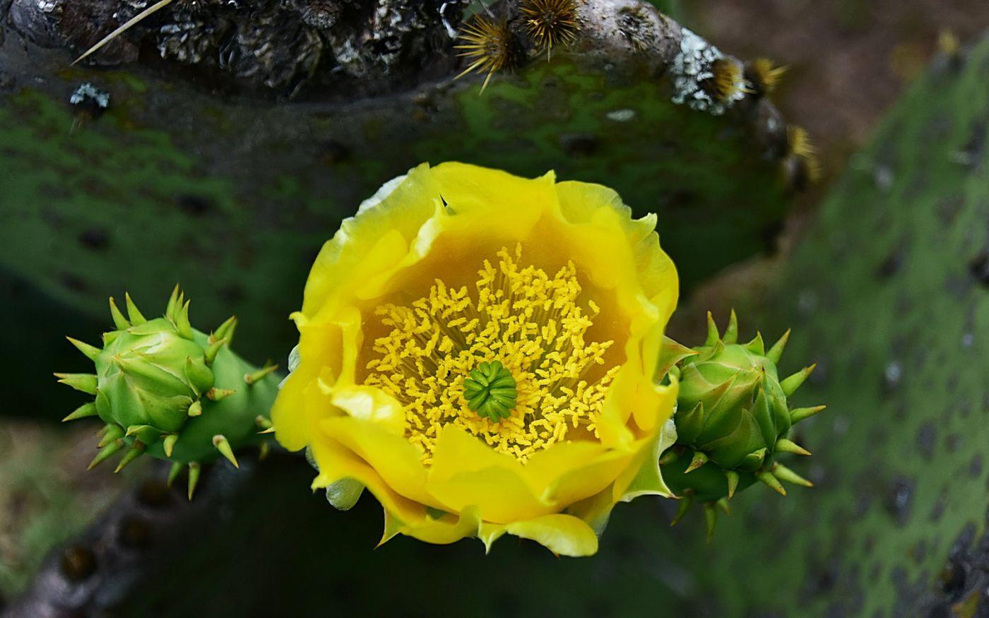 前院的仙人掌开花了_图1-4