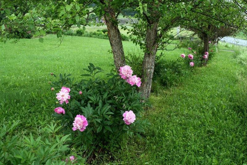 克丽农场花园_图1-15