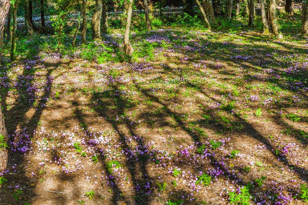克罗地亚克尔卡国家公园(Krka National Park),阳光里的故事_图1-39