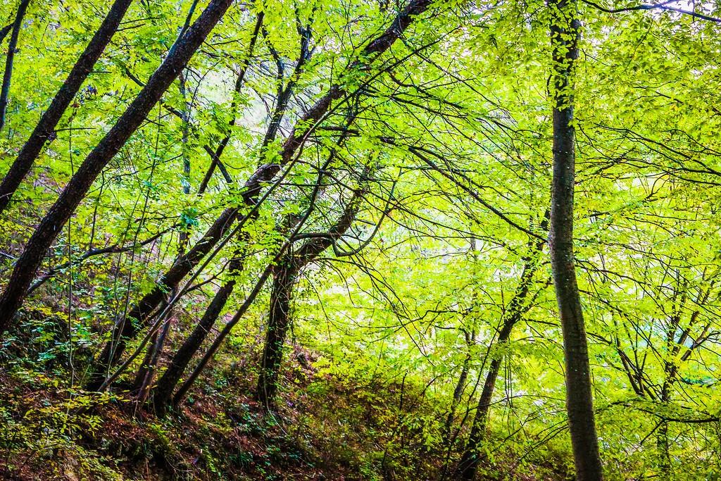 克罗地亚克尔卡国家公园(Krka National Park),阳光里的故事_图1-14