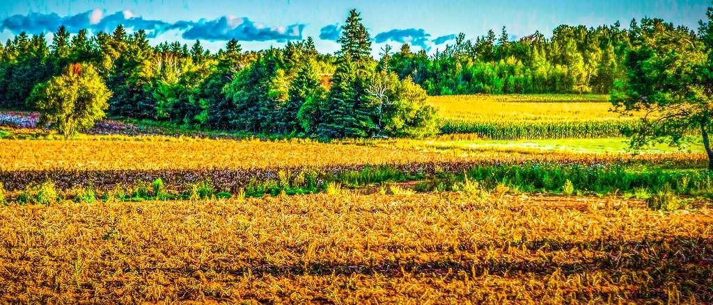 加拿大路途,自然与人文_图1-8