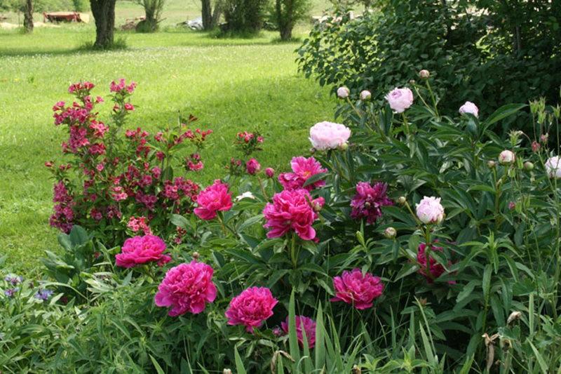 克丽农场花园----3_图1-15