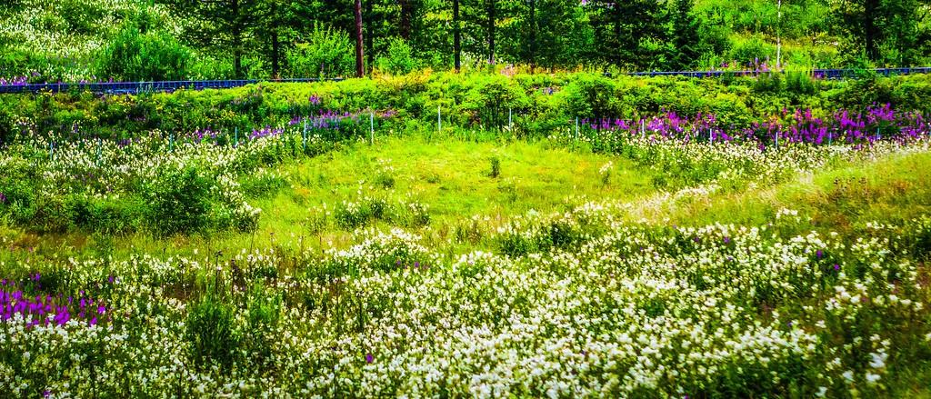 北欧风光,山林中的家_图1-37