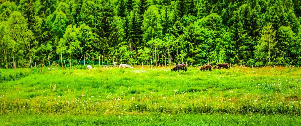北欧风光,山林中的家_图1-39