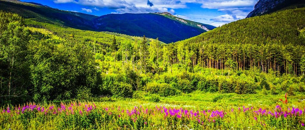 北欧风光,山林中的家_图1-5