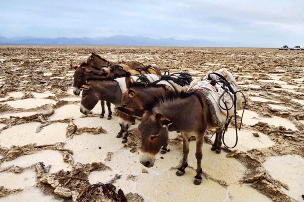 达纳基勒洼地---地球盐与绿泉_图1-11