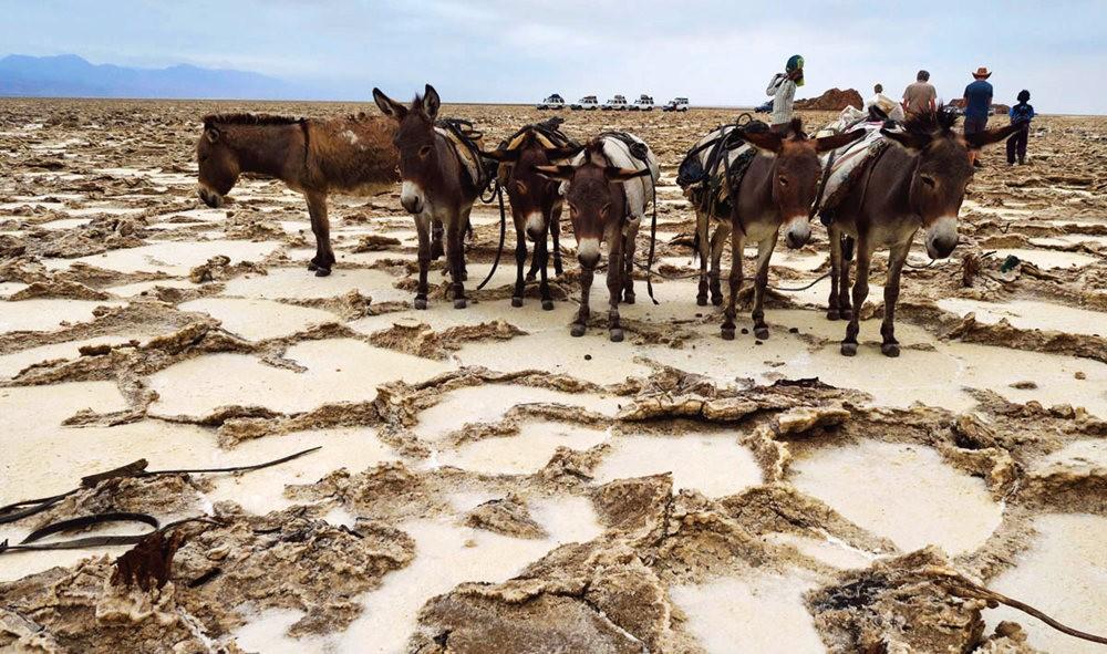 达纳基勒洼地---地球盐与绿泉_图1-14