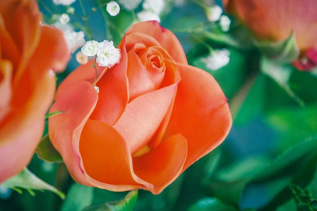 玫瑰花,一束表真情_图1-16
