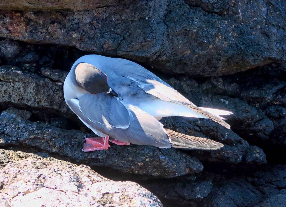 科隆群岛游踪---3_图1-4