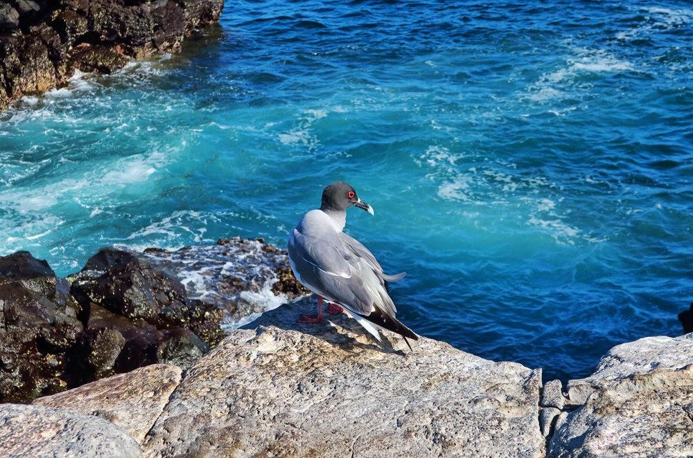 科隆群岛游踪---3_图1-6