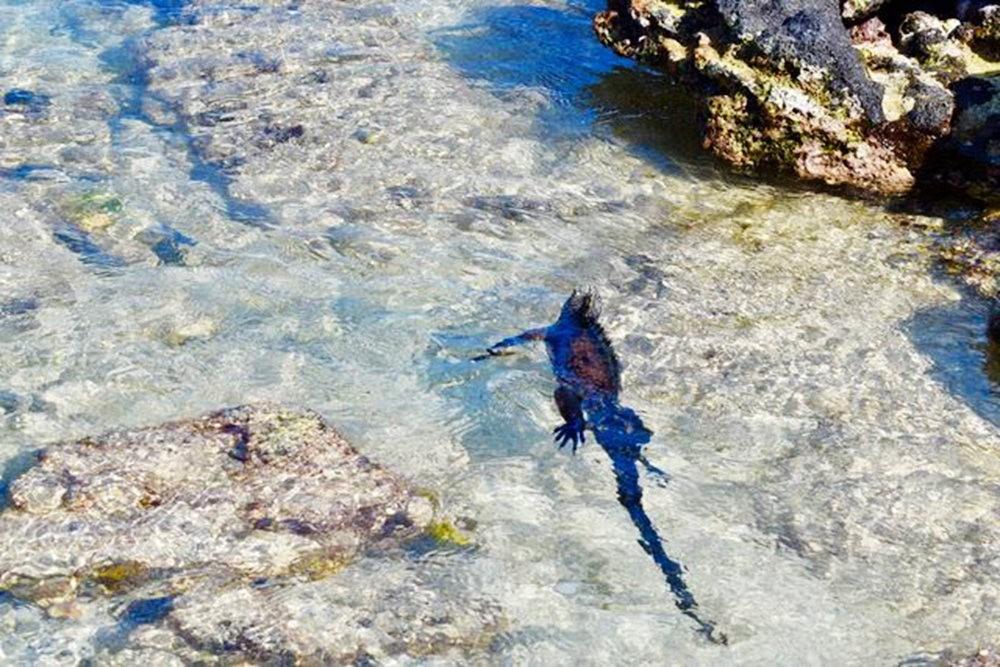 科隆群岛游踪---3_图1-19