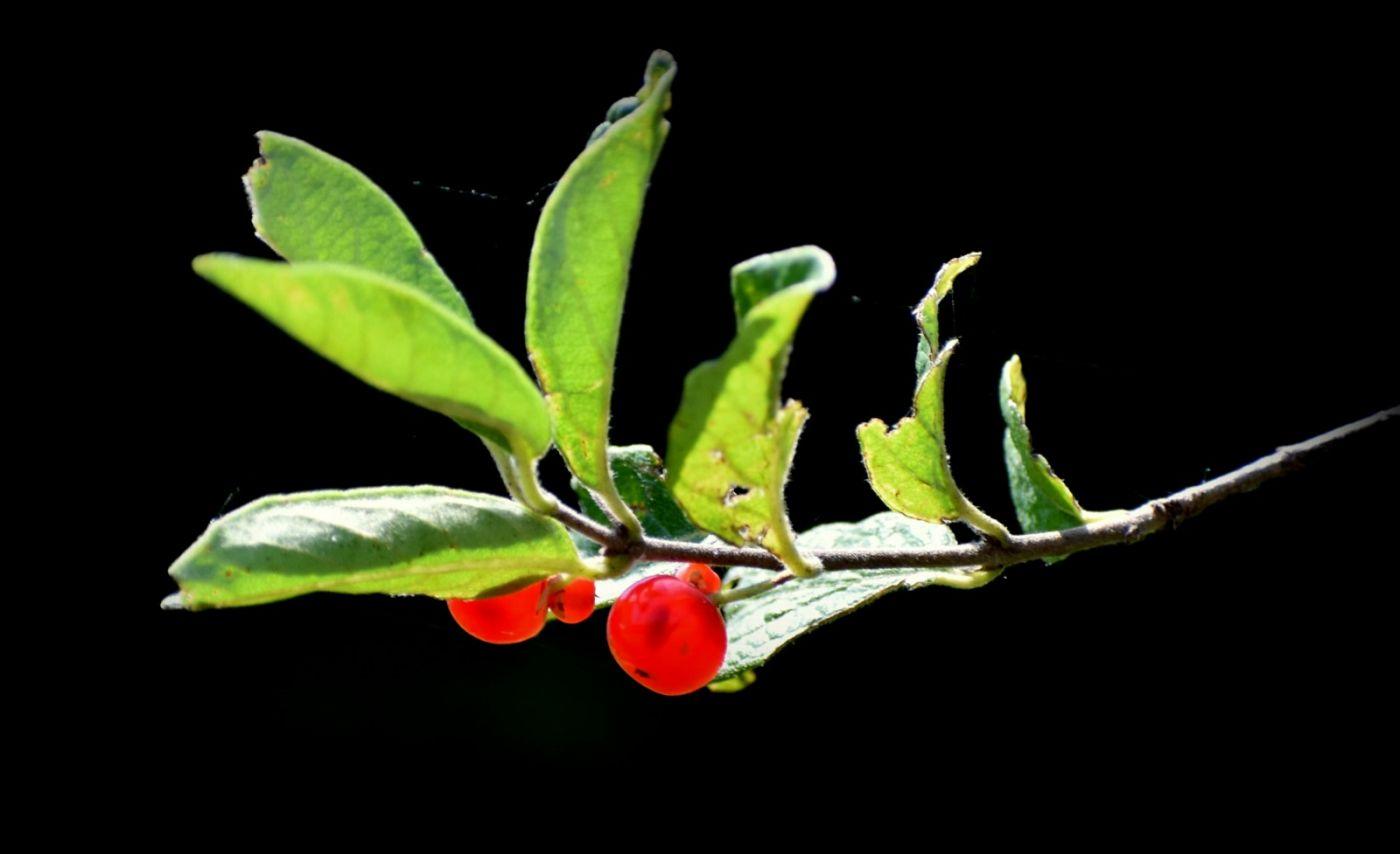夏天开在树上的红果果_图1-2