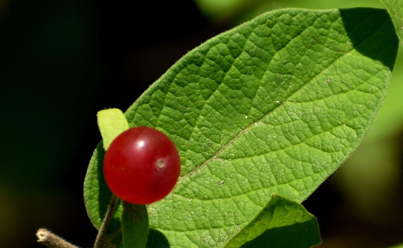夏天开在树上的红果果_图1-3