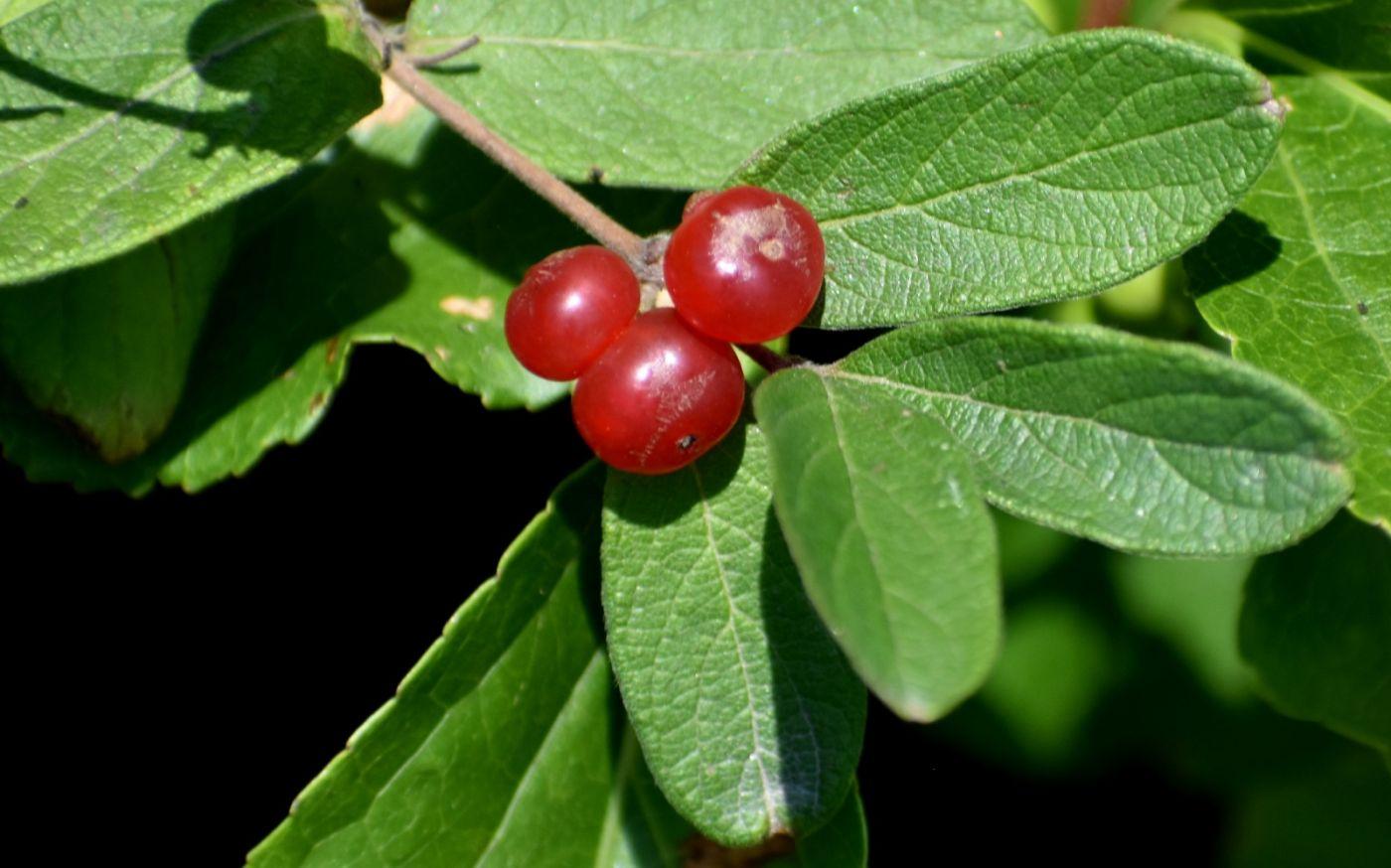 夏天开在树上的红果果_图1-9