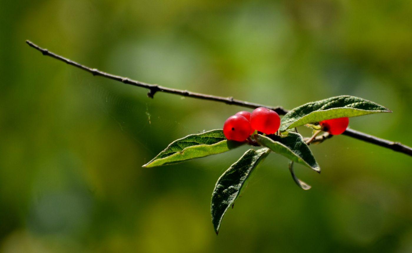 夏天开在树上的红果果_图1-10