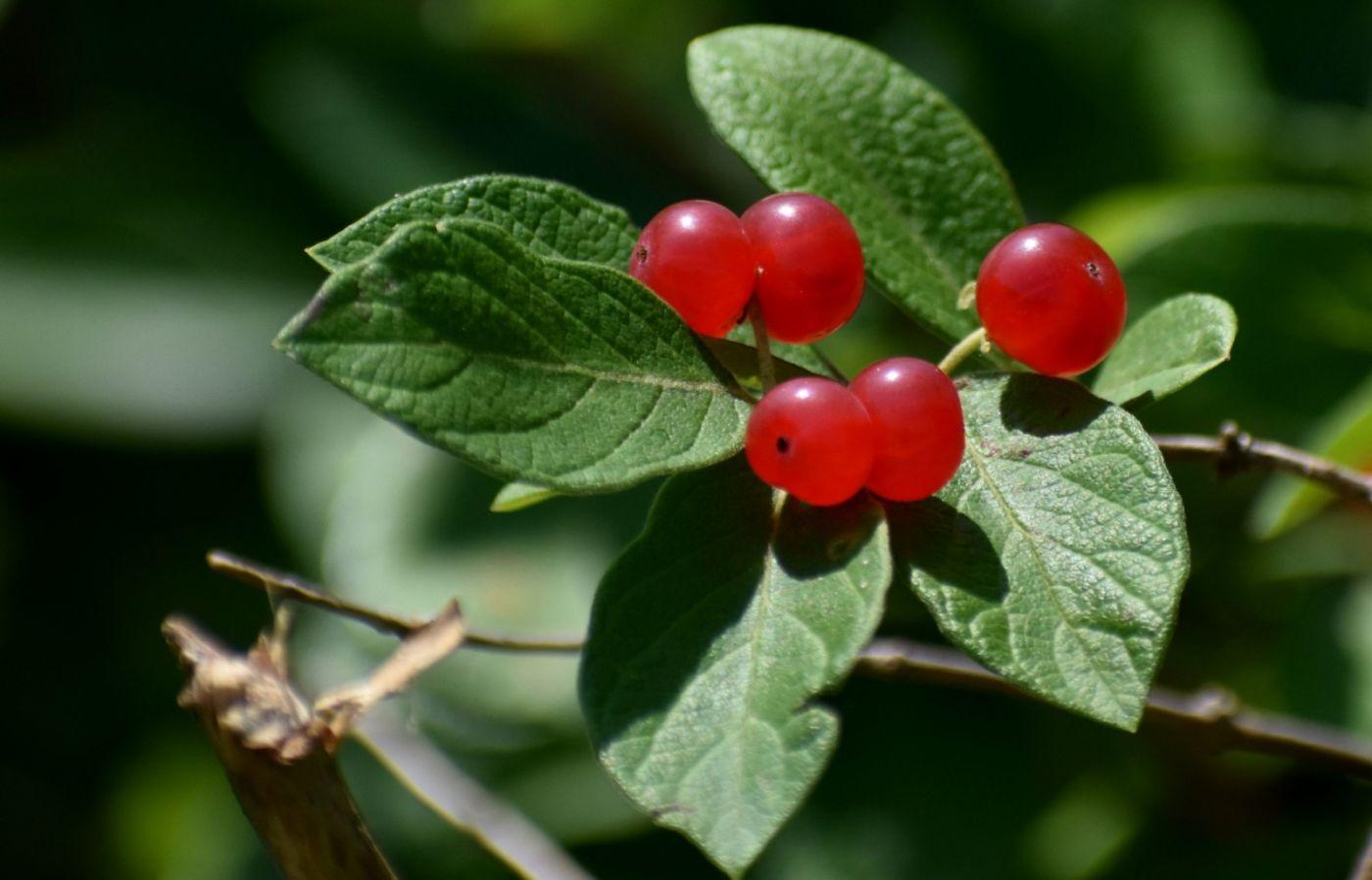 夏天开在树上的红果果_图1-14