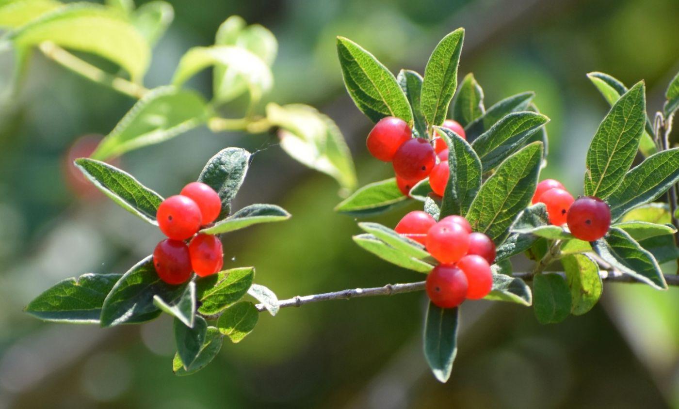 夏天开在树上的红果果_图1-18