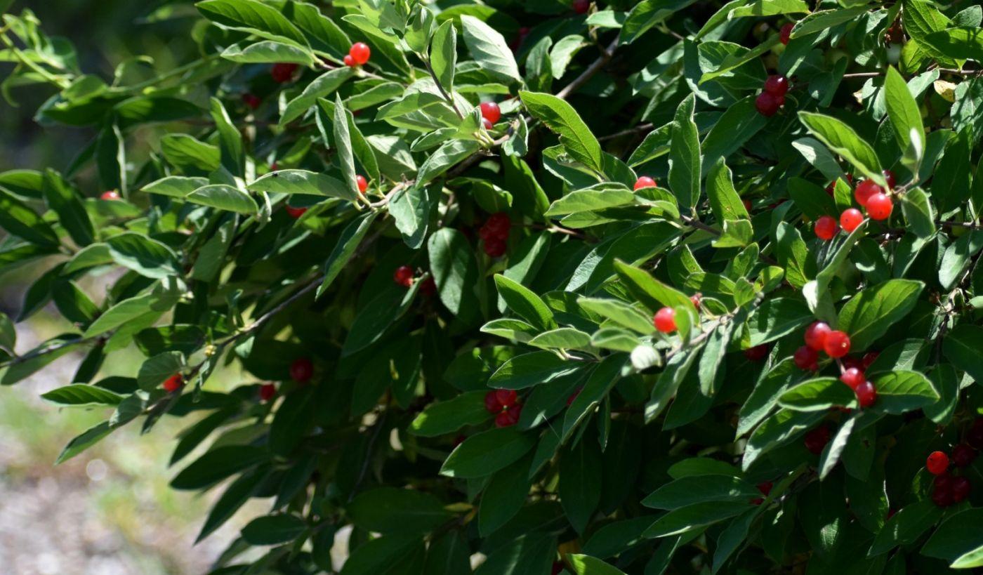 夏天开在树上的红果果_图1-19