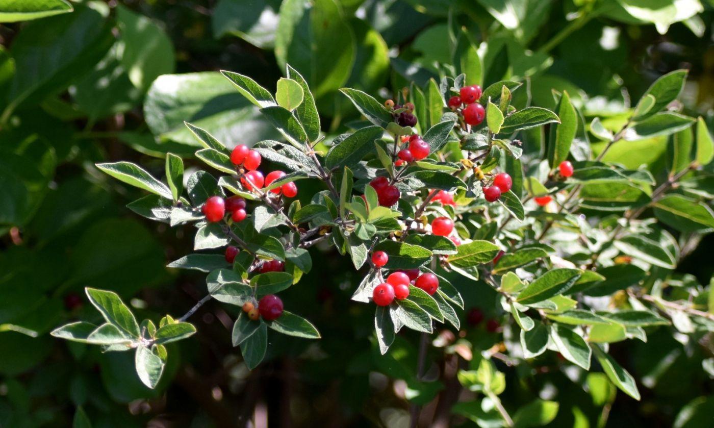 夏天开在树上的红果果_图1-20