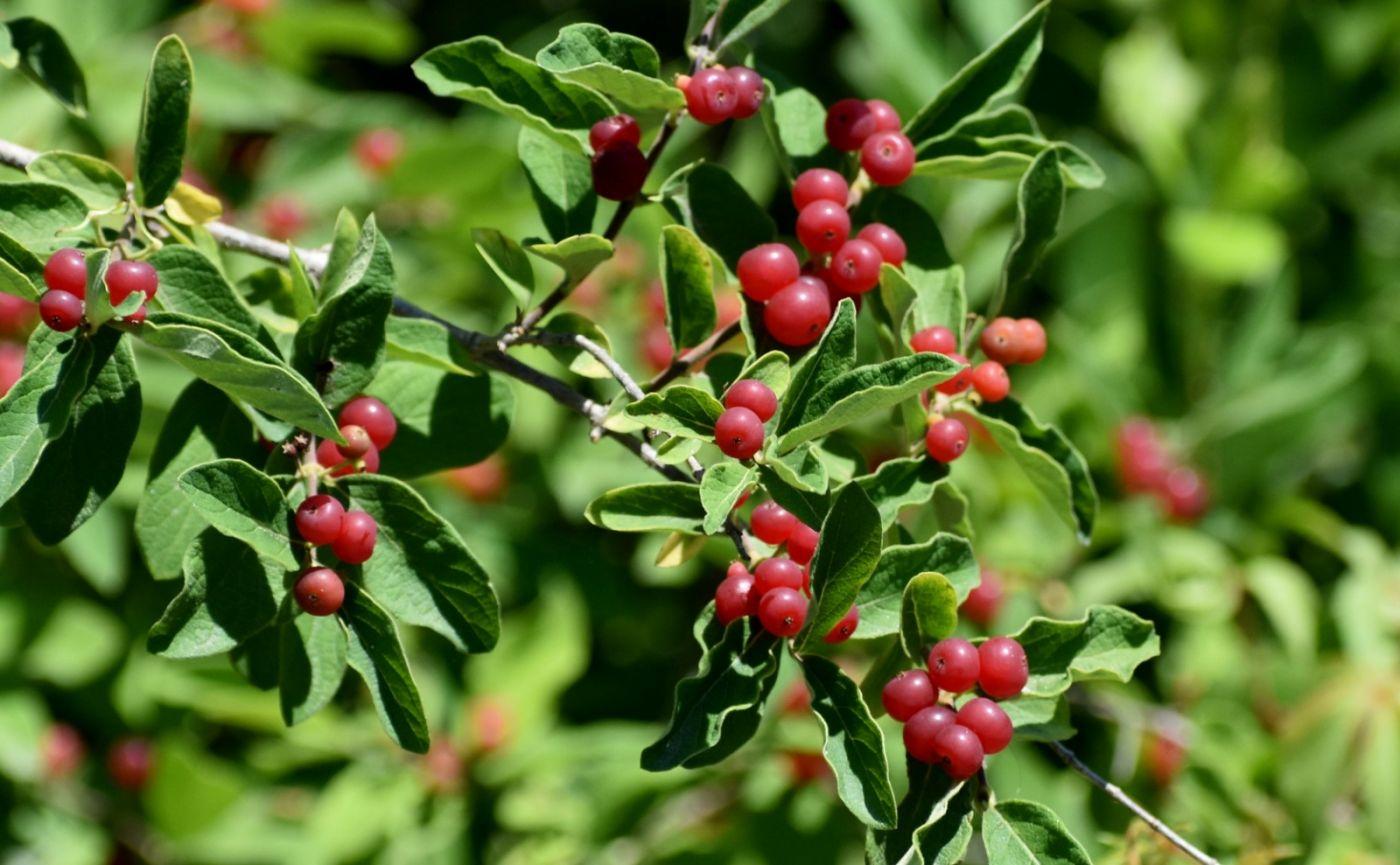 夏天开在树上的红果果_图1-21