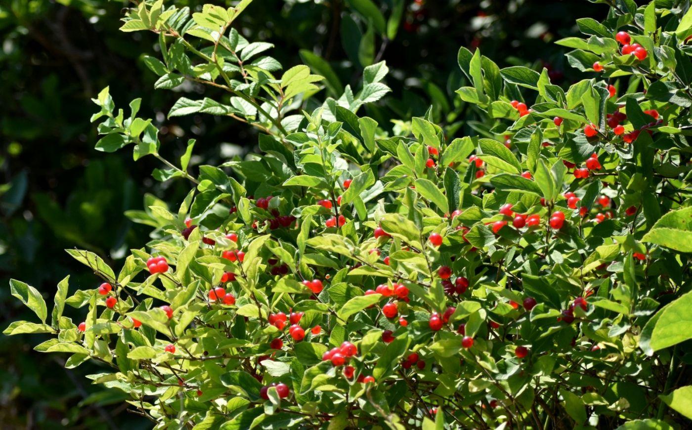 夏天开在树上的红果果_图1-22