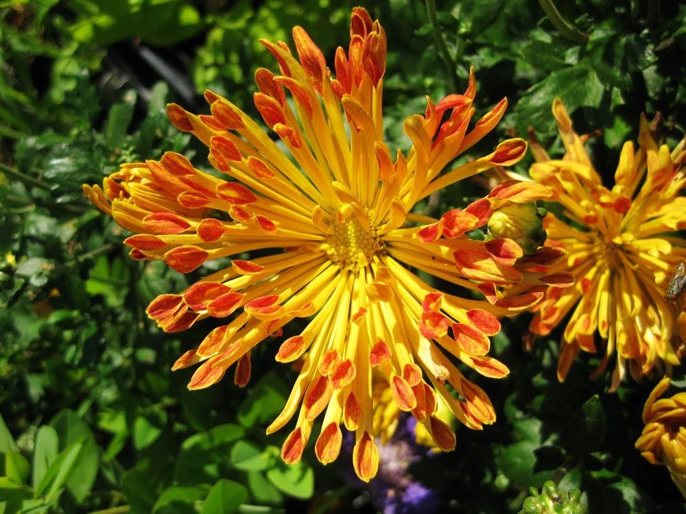 7.4假日前后的花卉---2_图1-1