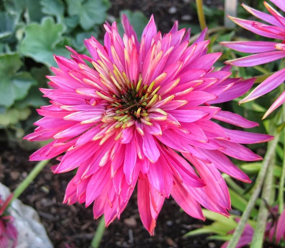 7.4假日前后的花卉---2_图1-2