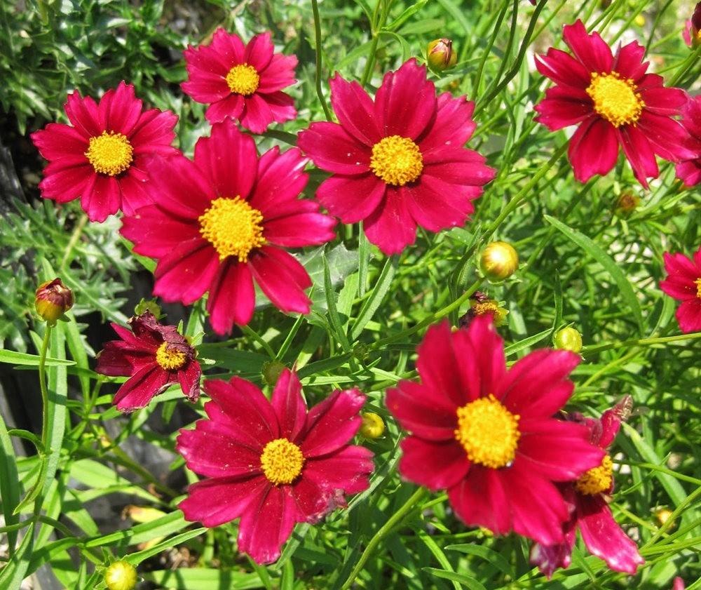 7.4假日前后的花卉---2_图1-3
