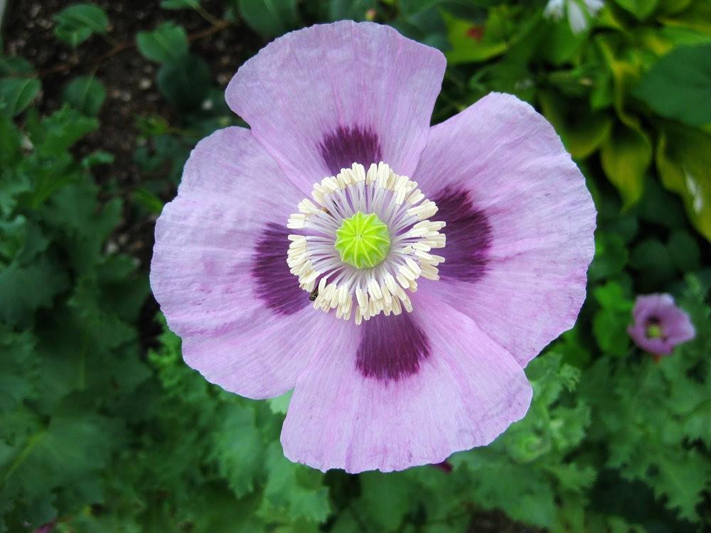 7.4假日前后的花卉---2_图1-4