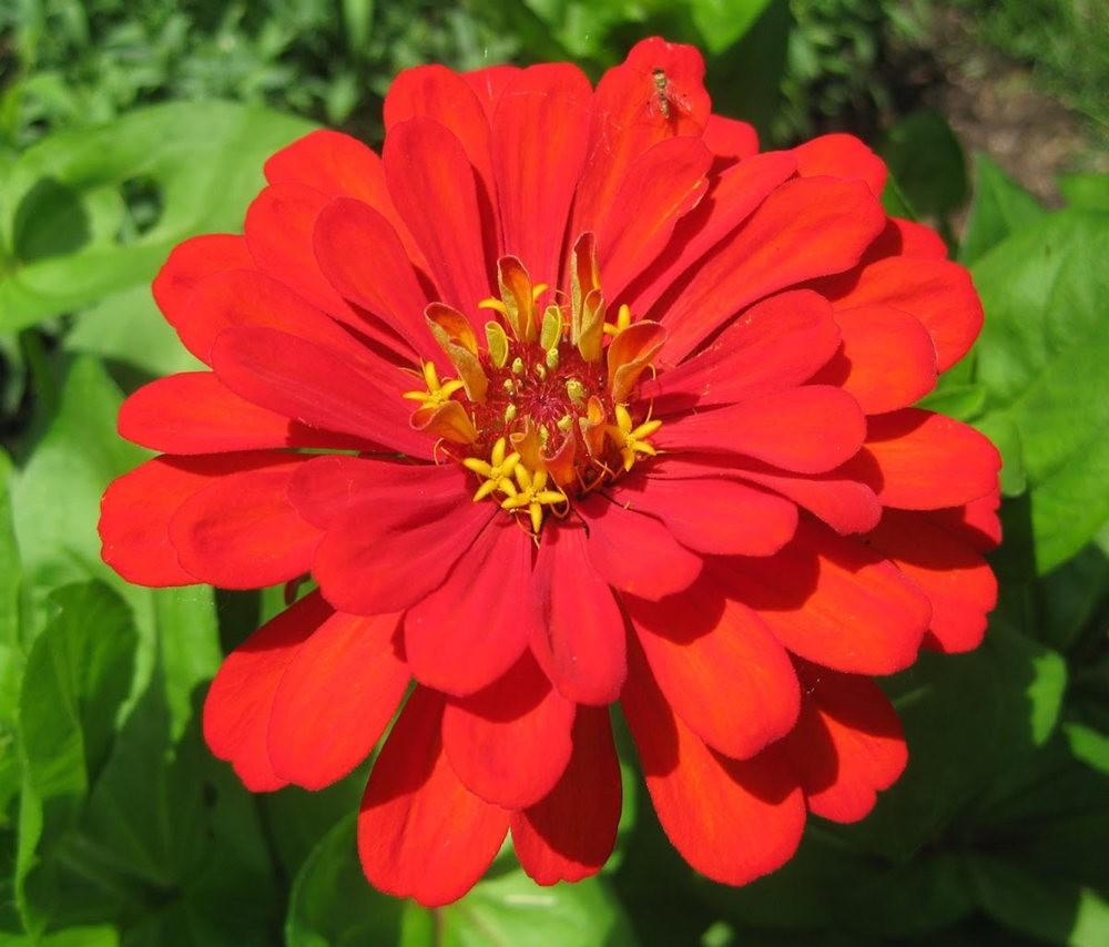 7.4假日前后的花卉---2_图1-7