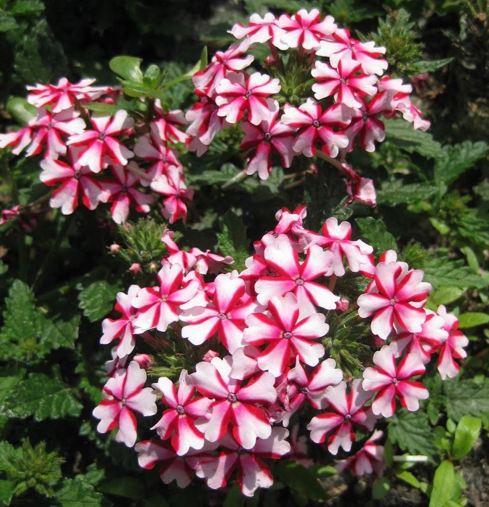 7.4假日前后的花卉---2_图1-14