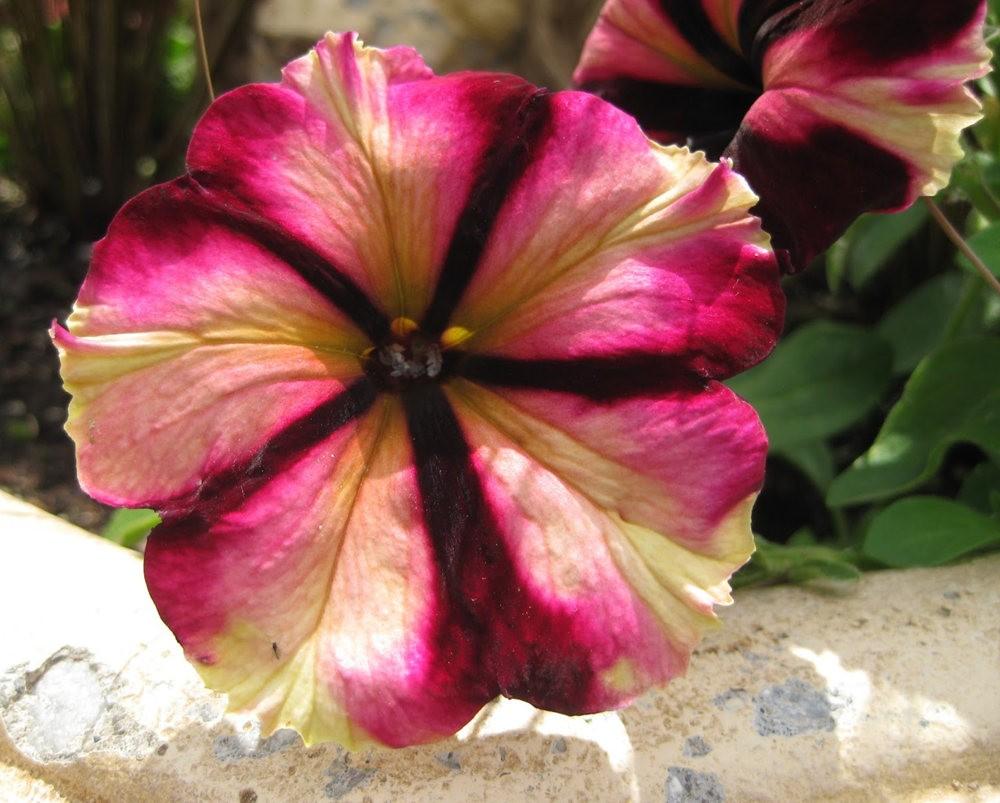 7.4假日前后的花卉---2_图1-15