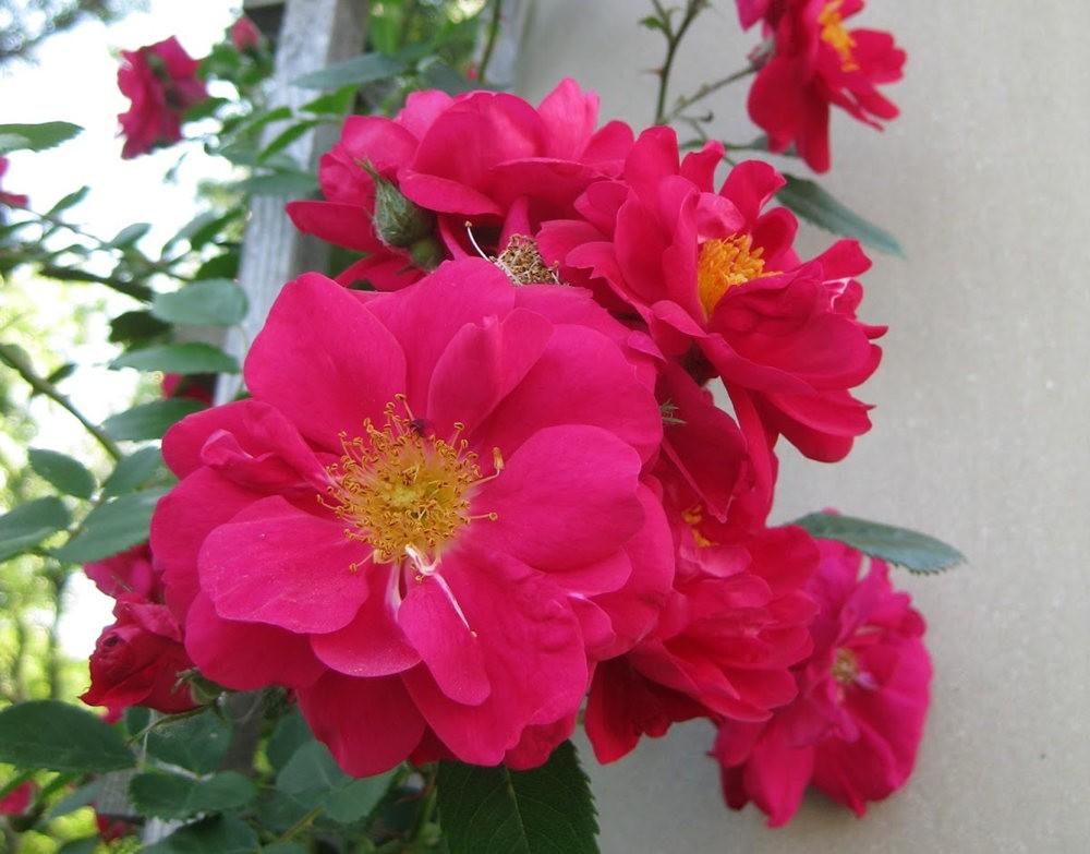 7.4假日前后的花卉---2_图1-18