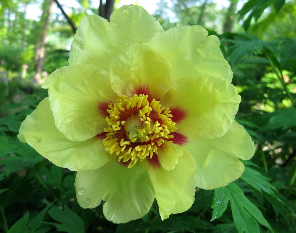 7.4假日前后的花卉---2_图1-21