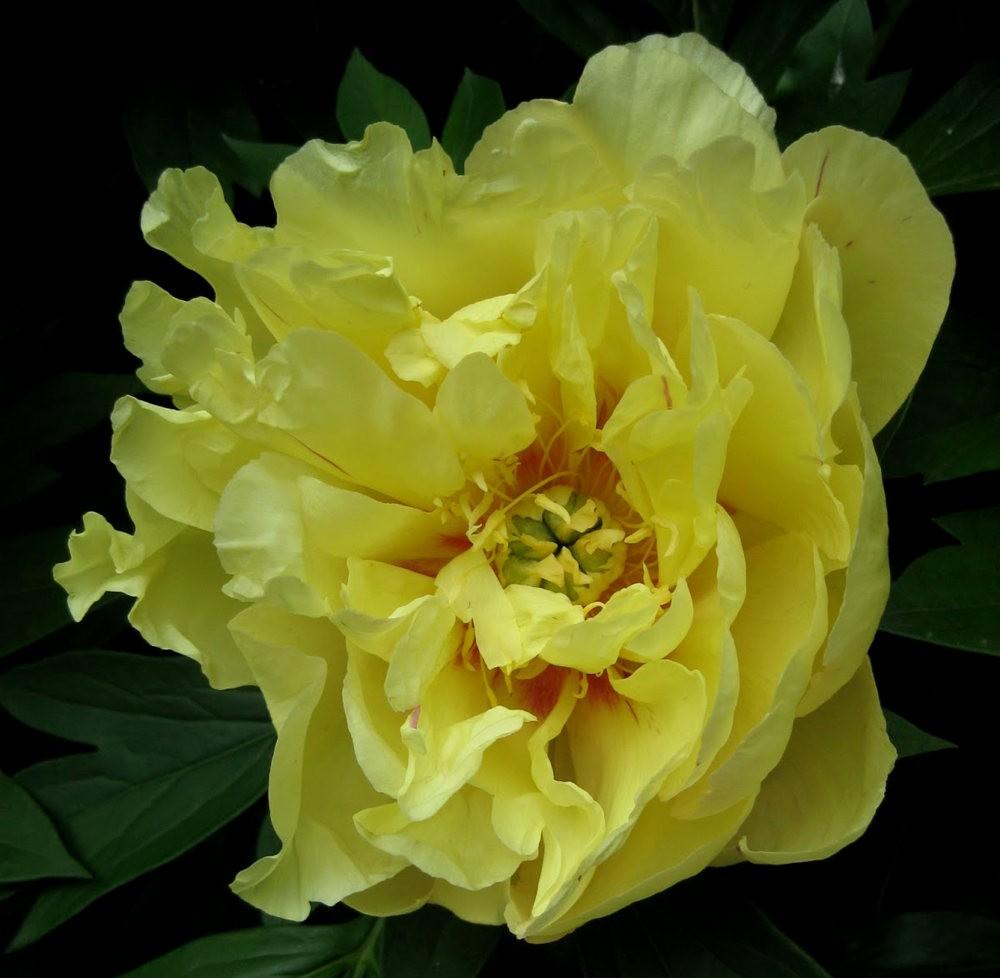7.4假日前后的花卉---2_图1-22