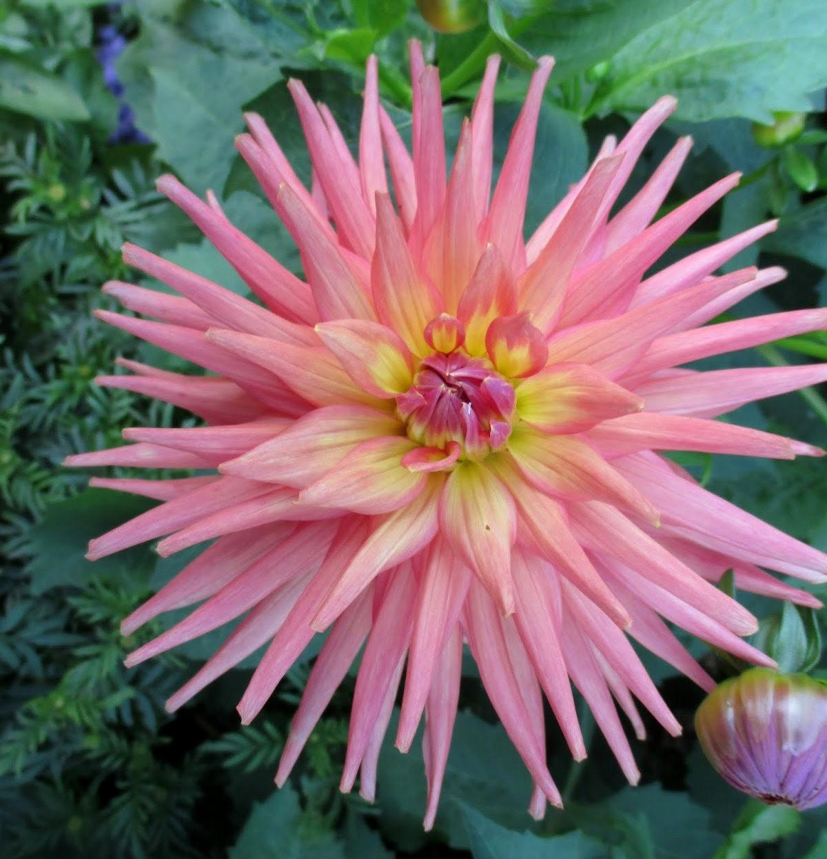 7.4假日前后的花卉---2_图1-25