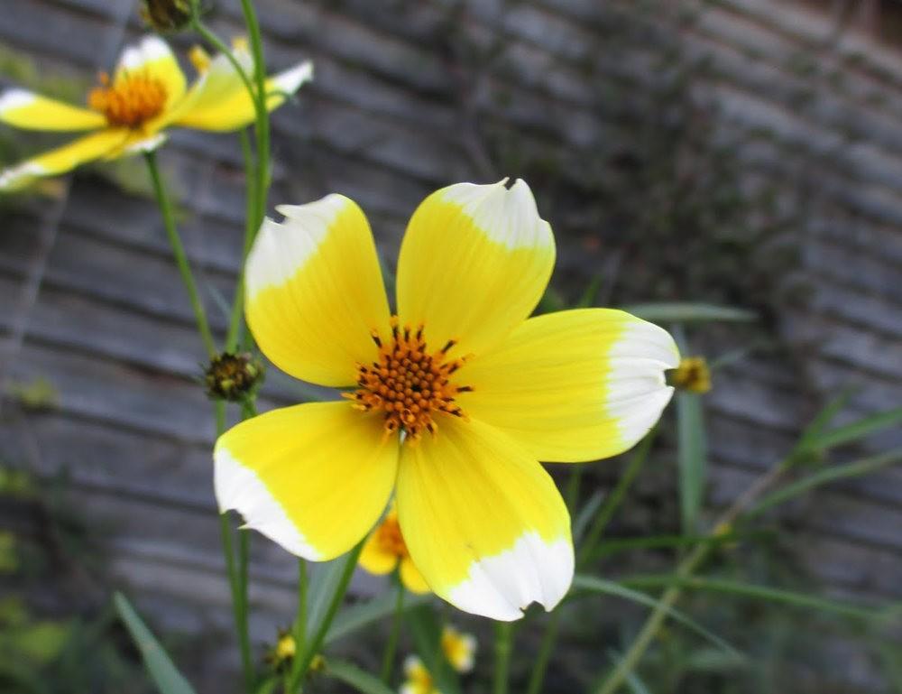 7.4假日前后的花卉---2_图1-26