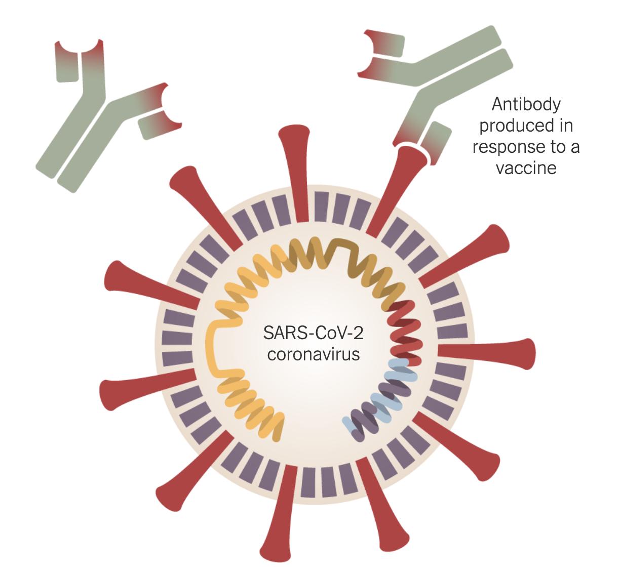 世界各国开发疫苗预防病毒情况纵览_图1-2